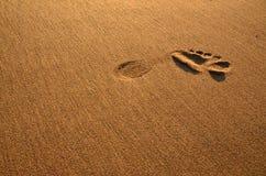 Linkerdievoet in het natte zand wordt gedrukt stock afbeeldingen