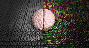 Linkes Gehirn u. rechtes Gehirn Stockfoto
