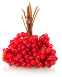 Linking of berries a guelder-rose Stock Image