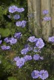 Lino blu Immagini Stock Libere da Diritti