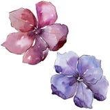 Lino colorido Flor botánica floral Wildflower salvaje de la hoja de la primavera aislado Fotografía de archivo libre de regalías