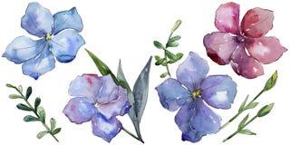 Lino colorido Flor botánica floral Wildflower salvaje de la hoja de la primavera aislado Imágenes de archivo libres de regalías