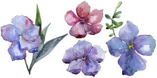 Lino colorido Flor botánica floral Wildflower salvaje de la hoja de la primavera aislado Fotografía de archivo