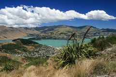 Lino della Nuova Zelanda Fotografia Stock