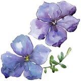Lino violeta Flor botánica floral Wildflower salvaje de la hoja de la primavera aislado Fotografía de archivo libre de regalías
