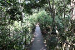 Linowy bridger po środku tropikalnego lasu Obraz Stock