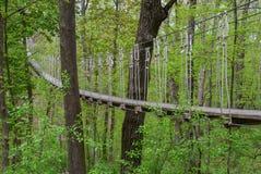 Linowy most w drewnach Obrazy Stock