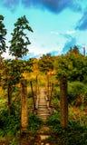 Linowy most w naturze Zdjęcia Royalty Free