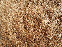 Linseed background natural diet breakfast food. Cereal closeup grain sheeds Stock Image