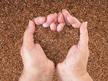 Linseeds in woman hands Stock Image
