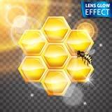 Linsenglüheneffekt Bienenwabe, Biene, glühender Effekt der Sonne Helle Lichter, greller Glanz, Linseneffekt Auch im corel abgehob Stockfotografie