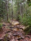 Lintang足迹在Bako国家公园,婆罗洲,马来西亚 免版税库存图片