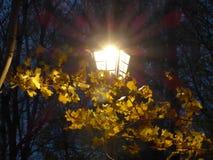 Linterna brillante en las hojas de otoño fotografía de archivo