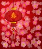 Linterna china del Año Nuevo con rojo del flor de cereza ilustración del vector