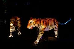 Linterna china del tigre Foto de archivo