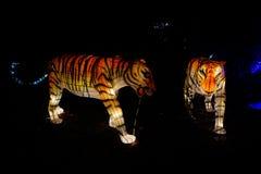 Linterna china del tigre Fotos de archivo