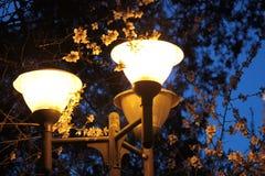 Linterna de la calle Imágenes de archivo libres de regalías