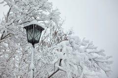 Linterna de la calle con los carámbanos en los arbustos nevados Imagenes de archivo