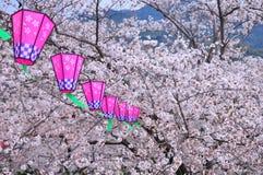 Linterna de papel japonesa y flor de sakura Imagen de archivo