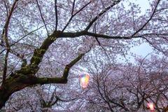 Linterna de Sakura Festival en el parque de Omiya, Saitama, Japón en primavera Foto de archivo libre de regalías