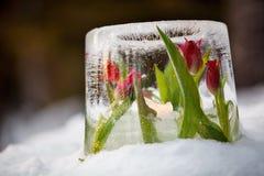 Linterna del hielo fotografía de archivo