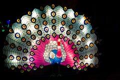 Linterna del pavo real con la cola colorida abierta imagen de archivo