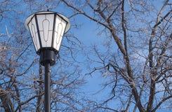 Linterna en árboles congelados delanteros en el cielo azul Fotos de archivo