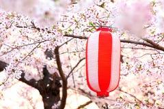 Linterna japonesa con Sakura Fotos de archivo libres de regalías