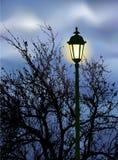 Linterna que brilla intensamente cerca de las ramificaciones Imagenes de archivo