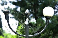 Linterna quebrada de la calle Imagenes de archivo