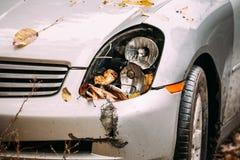 Linterna quebrada de la lámpara y coche de parachoques rasguñados con daño profundo Imagen de archivo
