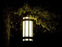 Linterna solitaria en árbol en oscuridad extrema Imágenes de archivo libres de regalías