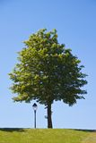 Linterna y árbol Imagen de archivo