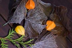 Linternas anaranjadas en las hojas Imagen de archivo