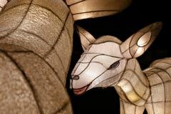 Linternas de las ovejas Imágenes de archivo libres de regalías