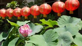 Linternas de papel rojas que cuelgan en yarda del templo el día soleado entre el verdor jugoso en país oriental Chino tradicional almacen de metraje de vídeo