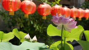 Linternas de papel rojas que cuelgan en yarda del templo el d?a soleado entre el verdor jugoso en pa?s oriental Chino tradicional metrajes