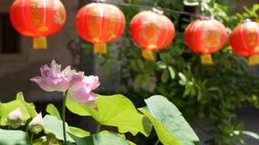 Linternas de papel rojas que cuelgan en yarda del templo el d?a soleado entre el verdor jugoso en pa?s oriental Chino tradicional almacen de metraje de vídeo