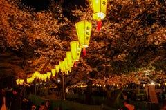Linternas de Sakura Festival y flores de cerezo lleno-florecidas en la noche, Ueno ParkUeno Koen, distrito de Ueno de Taito, Toki Imagen de archivo