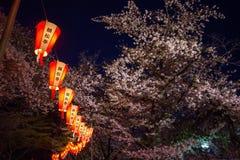 Linternas de Sakura Festival y flores de cerezo lleno-florecidas en la noche, Ueno ParkUeno Koen, distrito de Ueno de Taito, Toki Fotografía de archivo libre de regalías