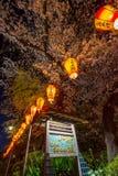 Linternas de Sakura Festival y flores de cerezo lleno-florecidas en la noche, Ueno ParkUeno Koen, distrito de Ueno de Taito, Toki Imágenes de archivo libres de regalías