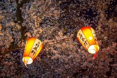 Linternas de Sakura Festival y flores de cerezo lleno-florecidas en la noche, Ueno ParkUeno Koen, distrito de Ueno de Taito, Toki Foto de archivo