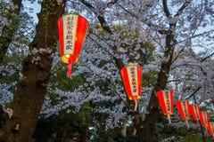 Linternas de Sakura Festival y flores de cerezo lleno-florecidas en Ueno ParkUeno Koen en el distrito de Ueno de Taito, Tokio, Ja Imagen de archivo libre de regalías