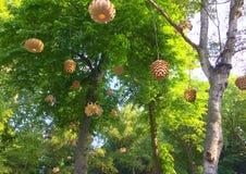 Linternas en los árboles Imagen de archivo
