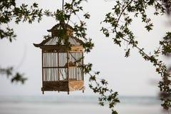 Linternas que cuelgan de los árboles para adornar en la jaula de pájaros de la puesta del sol Fotos de archivo