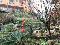 Linternas rojas en árbol en cuadrado en el pueblo de Tiantou Fotografía de archivo libre de regalías