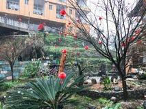 Linternas rojas en árbol en la calle en el pueblo de Tiantou Imagen de archivo libre de regalías