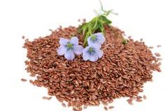 Linum usitatissimum - common flax Stock Image
