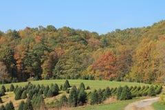 Linville, NC的秋天颜色 免版税库存照片