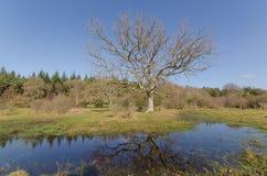 Linwood Bottom. The landscape near Linwood Bottom, New Forest Nationa Park Royalty Free Stock Photography